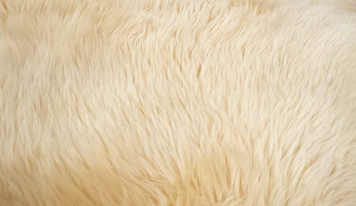 Clean Carpet at home