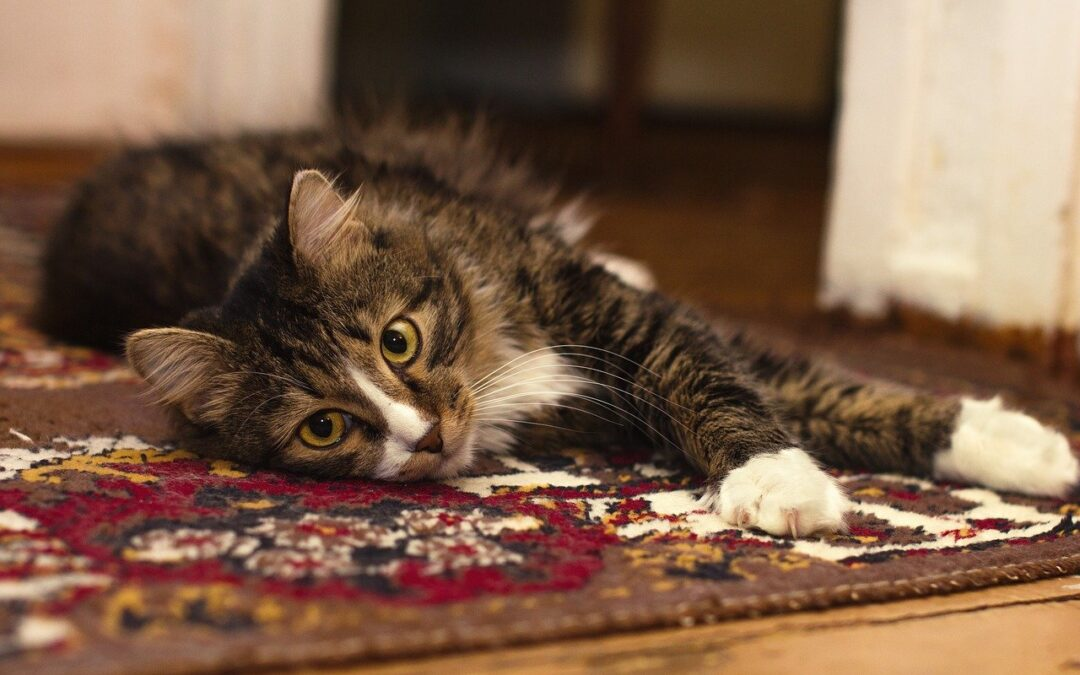 How Often Should Pet Owners Clean Their Carpets?